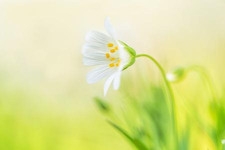 Grote Muur - De eerste lentebloeiers laten zich weer zien. - foto door Vanhekke op 15-04-2021 - deze foto bevat: bloem, macro, lentebloeiers, lente, groen, geel, closeup, fabriek, bloem, water, bloemblaadje, terrestrische plant, gras, lucht, natuurlijk landschap, kruidachtige plant, pedicel