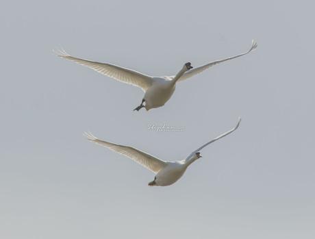 Vliegen in formatie
