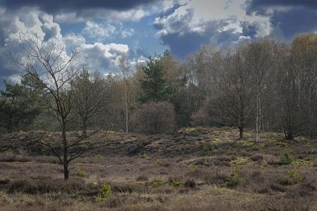 landschap - Landschap   - foto door Dianavandenheuvel op 12-04-2021 - locatie: 8085 Doornspijk, Nederland - deze foto bevat: wolk, fabriek, lucht, natuurlijk landschap, boom, houtachtige plant, cumulus, berg, landschap, grasland