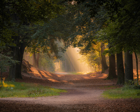Natures light