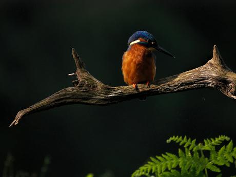 Vogeltje op tak