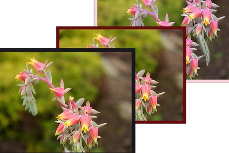 'n mooie bloeiende vetplant