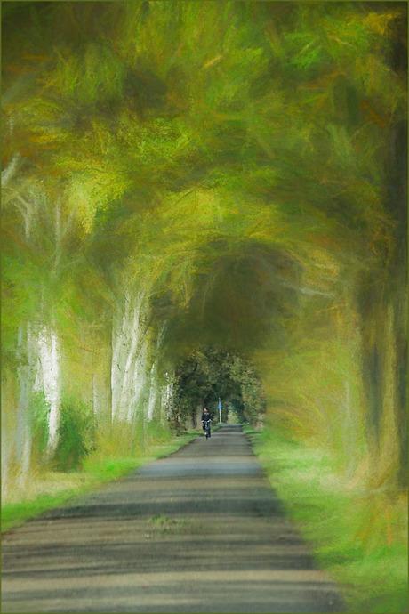 fietsen in het bos...............................