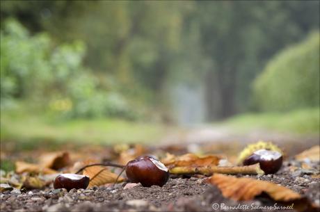 Herfst - Eindhovens Kanaal 3