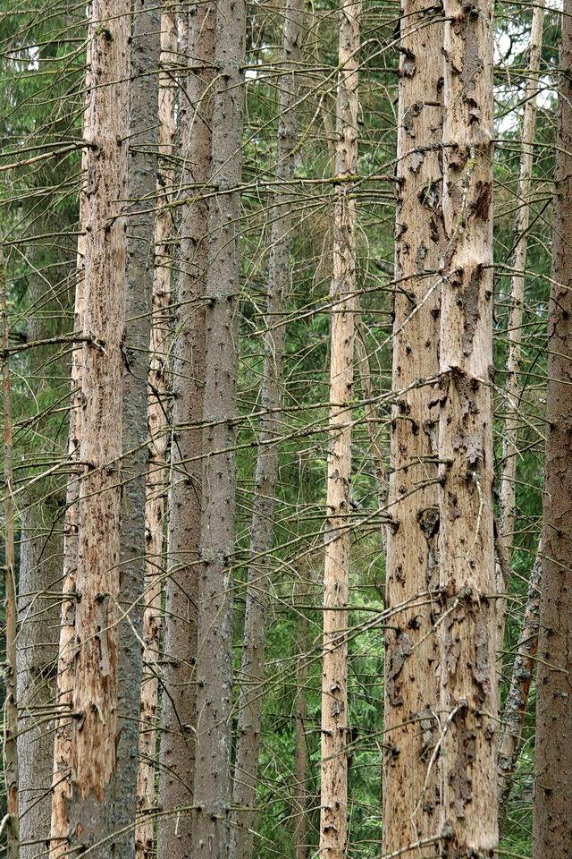Natuur. - Nationalpark Bayerischer Wald Duitsland. Ook de natuur heeft zijn eigen lijnenspel.  4 juni 2018. Groetjes Bob. - foto door oudmaijer op 20-04-2020 - deze foto bevat: natuur, vakantie, landschap, bos, zomer, bergen, duitsland, nationalpark, bayerischer wald