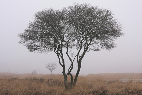 Fading degrees of trees