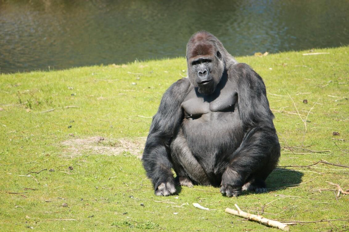 Zeg het maar! - Gemaakt in safaripark beekse bergen - foto door richette op 28-12-2016 - deze foto bevat: dierentuin, dieren, safari, aap