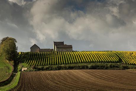 Herst zon op wijngaard