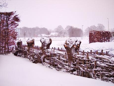 P2074550.jpg sneeuw