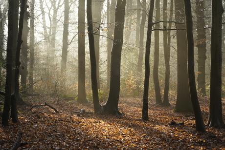 Mooie morgen in Rijs - Friesland