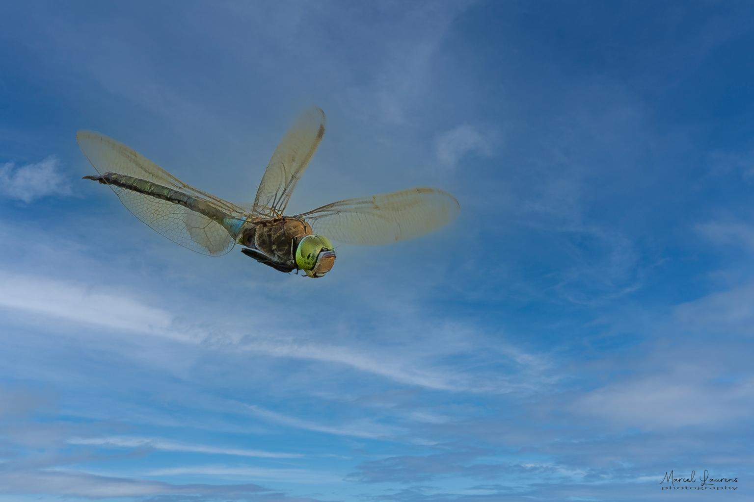 Libelle - Libelle in AWD - foto door Marcel2205 op 12-04-2021 - locatie: AWD - deze foto bevat: libelle, awd, wolk, lucht, insect, geleedpotigen, wiel, propeller, klep, libellen en damseflies, eendekker, hawker-libellen