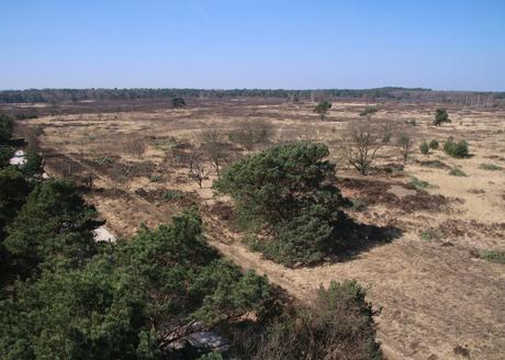 Een weids uitzicht vanuit de uitkijktoren op de Kalmthoutse Heide