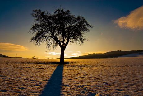 de boom van bell