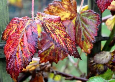 herfst in eigen tuin 1