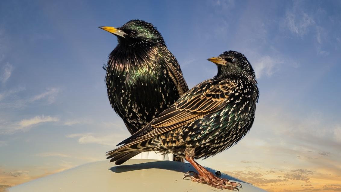 De neuzen dezelfde kant op. - - - foto door middelbk op 02-03-2021 - deze foto bevat: vogel