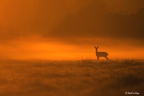 In the morninglight