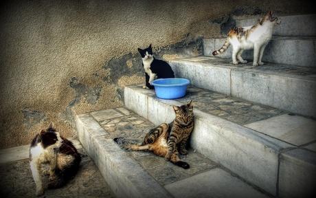Les quatre chats