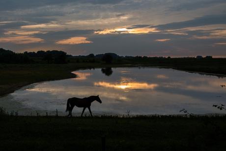 Paard bij zonsondergang
