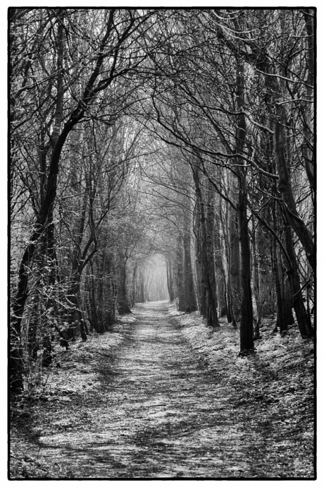 bospad in zwartwit