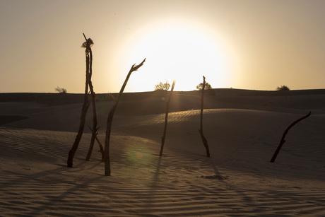 Jaisalmer_DessertSafari_RisingSun_Takken