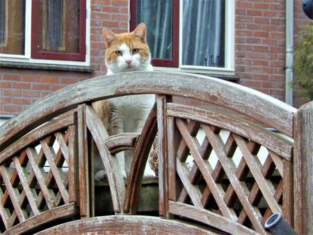 zijn jullie er nog? - hier keek de kat nieuwsgierig over de schutting, later kwam het kopje door de schutting heen (eerder geplaatste foto). de kat woont hier in de buurt, - foto door Tonny1946 op 01-12-2020 - deze foto bevat: rood, wit, ramen, kat, nieuwegein, achtertuin, rood/oranje, noveber 2018, schuttig