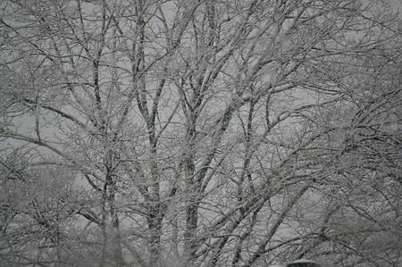 Winter - Winter in Maastricht - foto door Smeets op 07-04-2021 - locatie: Maastricht, Nederland - deze foto bevat: fabriek, takje, natuurlijk landschap, hout, kofferbak, vegetatie, grijs, boom, bevriezing, sneeuw