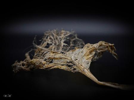Dor blad kan ook mooi zijn! - De structuur van het blad vond ik wel mooi! - foto door WMeijerink op 15-04-2021 - deze foto bevat: blad, structuur, fotografie, hoofd, fabriek, oog, menselijk lichaam, boom, gebaar, hout, takje, kunst, natuurlijk materiaal