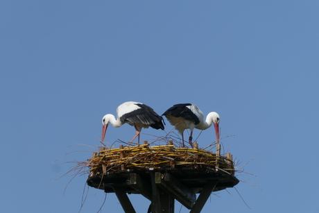 de bewakers van het nieuwe nest