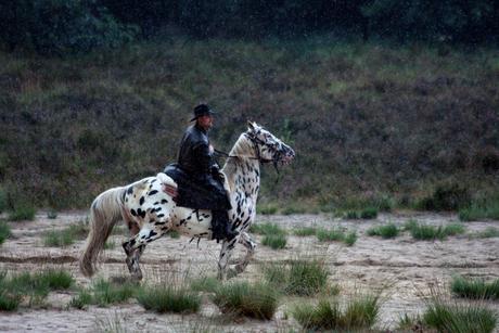 Appaloosa Horsemen?!