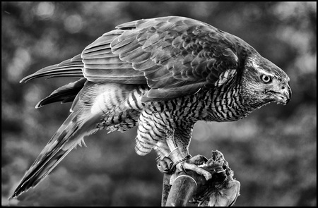 Ontbijt - - - foto door etiennec op 30-11-2015 - deze foto bevat: dieren, vogel, roofvogel