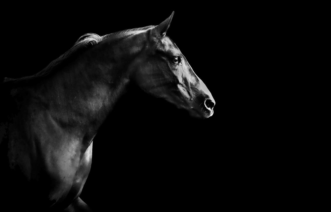 Dark Horse - Arabier - foto door darling-nickey op 26-03-2015 - deze foto bevat: donker, dark, black, paard, bw, white, arabier, horse, B/W, Black and white, darling nickey, arab horse