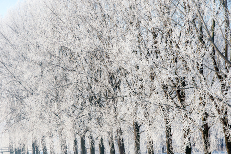 TPF_0342-winter2012