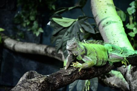 Kameleon - Pairi-Daiza - foto door winnybiets op 05-05-2021 - locatie: Brugelette, België - deze foto bevat: oog, fabriek, reptiel, leguaan, afdeling, organisme, terrestrische plant, geschaald reptiel, hagedis, terrestrische dieren