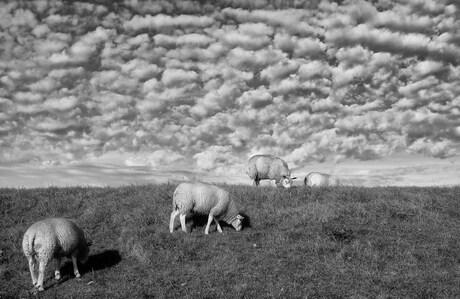 Schaapjeswolken