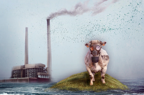 . . . Last Cow Standing . . .