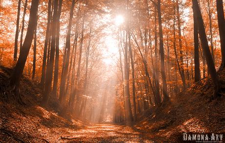 Het pad naar de hemel