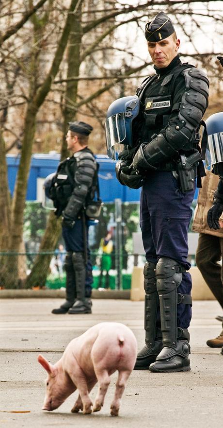 Porc du Gendarmerie