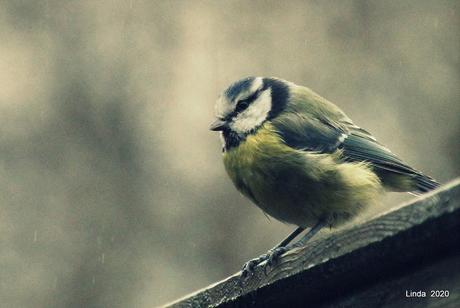 Klein vogeltje