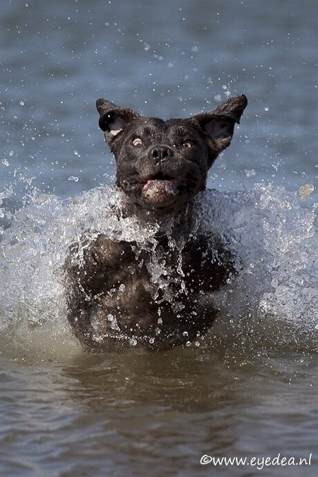 Mila de zeehond
