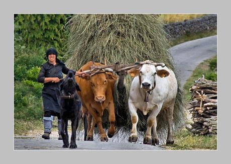 Cow-Girl