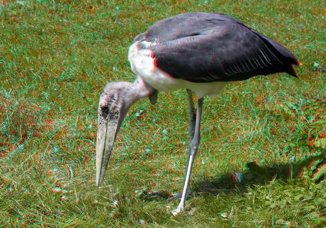 Mariboe Blijdorp Zoo Rotterdam 3D