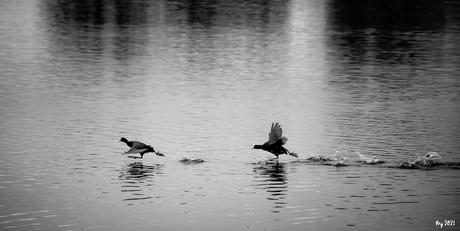 Holy Ducks