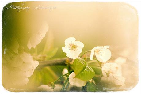 Beautifull Blossom ...