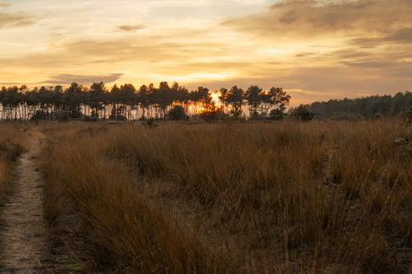 Zonsondergang heide bij Soerendonk