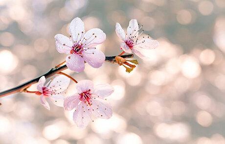 Genieten van het voorjaar