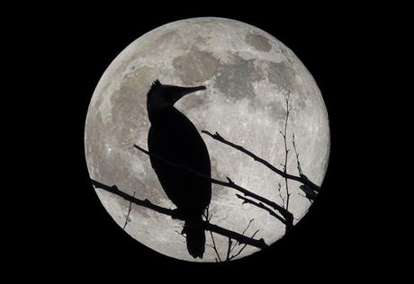 maan 29 maart