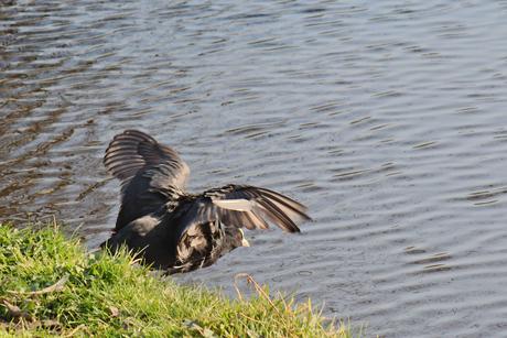 spring in het water