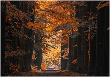De herfst komt eraan