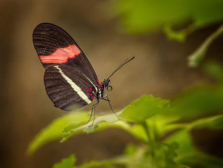 Dagje.. - vlindervallei in Luttelgeest! - foto door BNN op 17-01-2019 - deze foto bevat: macro, vlinders, bnn, luttelgeest orchideeenhoeve