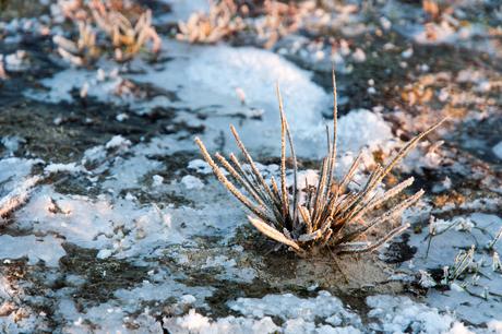 dwars door het ijs